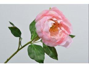 Umělá světle růžová pivoňka, květ je vyrobený z hedvábí. Výška pivoňky 57 cm.