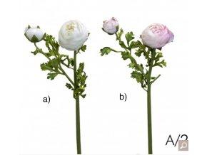 Ranunculus - Pryskyřník H56