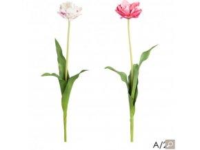 Tulipán H71 růžový / bílý