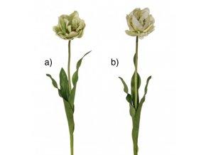 Tulipán H71 krémový / světle zelený