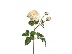 Růže Agatha - krémová