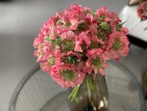 Umělá Scabiosa - hlaváč - růžová barva poslední 2 kytice