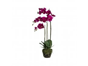 Orchidej do květináče - tmavě růžová