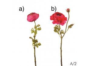 Ranunculus - růžový (pryskyřník)