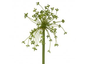 Allium stem