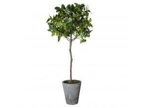 Ficus Bonsai stromek s květináčem