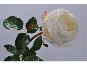 Růže SILK-KA - bílá - 71 cm