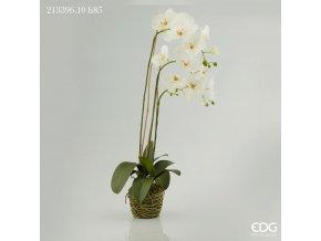 Bílá orchidej s mechem a kořeny EDG H85