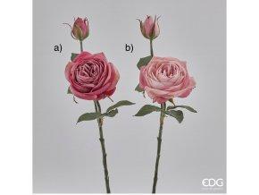 Růžová řůže EDG H38