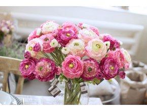 Ranunculus -růžové odstíny