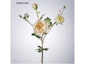 Krémová růže EDG H58