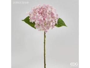 Světle růžová hortenzie EDG H40