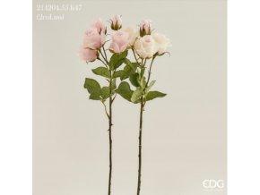 Trsová růže EDG H47