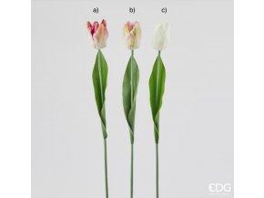 Tulipán mix EDG H54