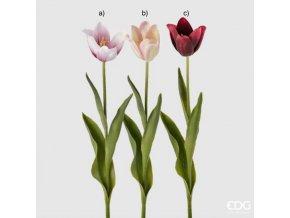 Tulipán mix EDG H47
