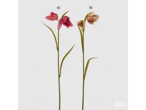 Fritillaria - řebčík EDG H45