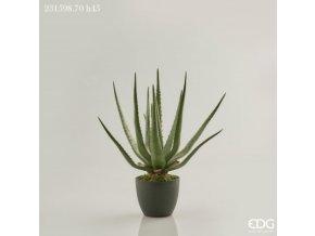 Aloe Vera EDG H45