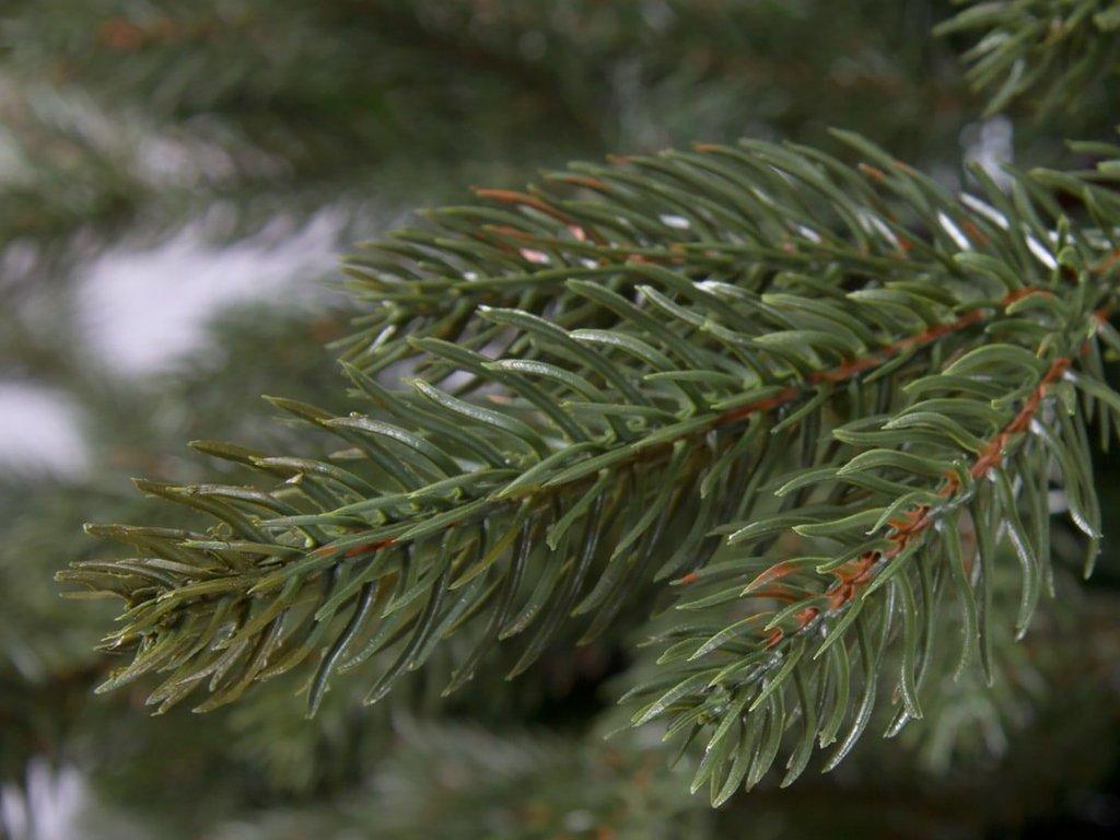 Vánoční stromek DELUXE jedle Bernard 210 cm