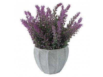 Květina v květináči fialový vřes 20 cm