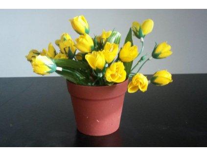 Květina v květináči Krokus puget