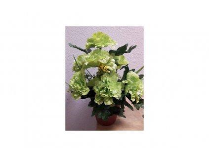 Květina v květináči Azalka zelená 18 x 24 x 18 cm