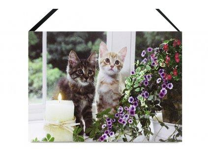 Sada 2 ks obrazů: Kočky s LED světlem 15 x 20 cm