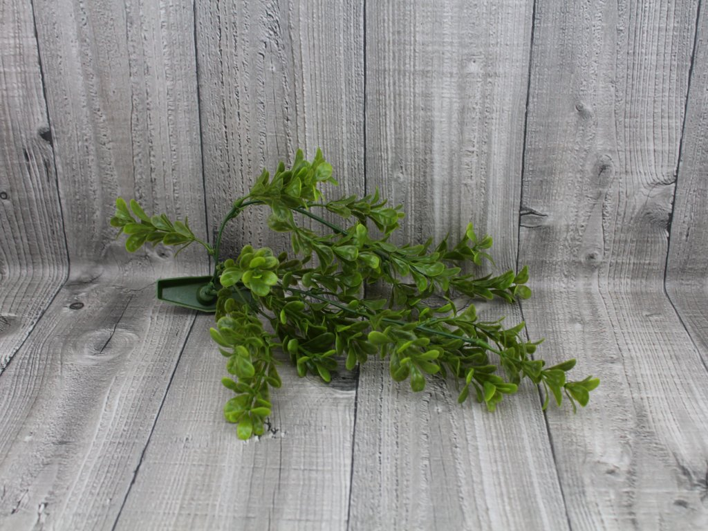 Vodní rostlina umělá-Bacopa