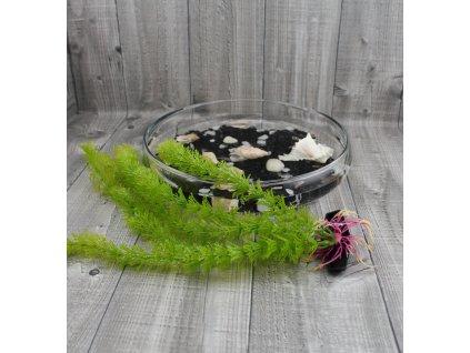 Vodní rostlina umělá-Limnophila