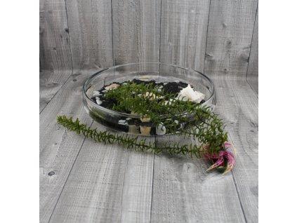 Vodní rostlina umělá-Elodea