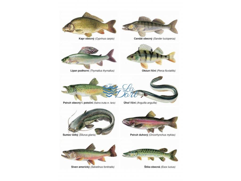 00286 Rybářské