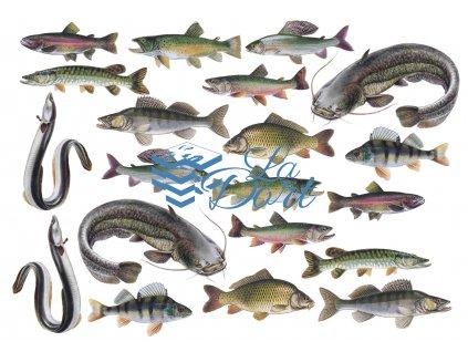 00285 Rybářské