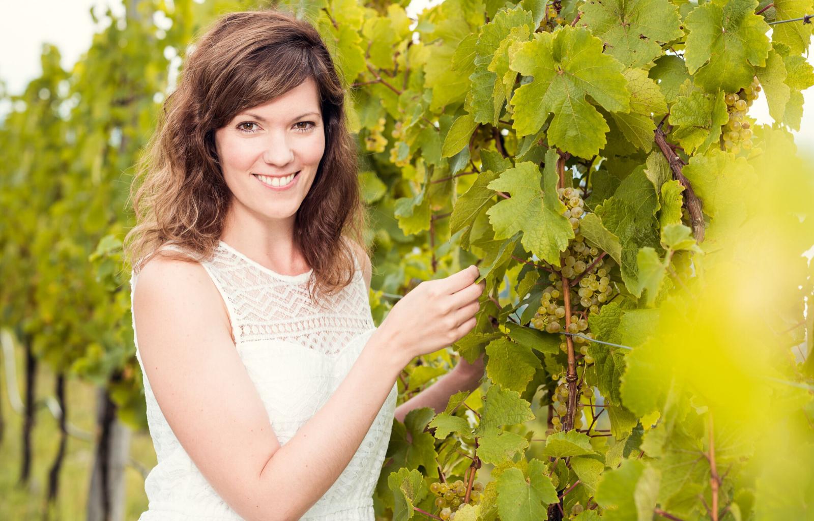 Vinná réva jako největší zdroj antioxidantů