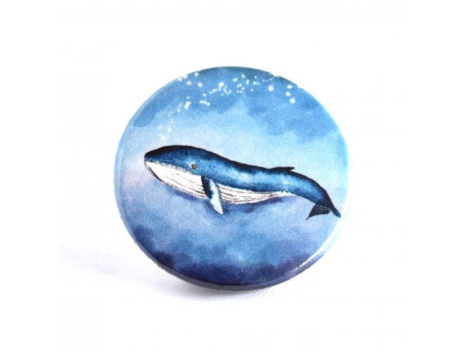 Velryba zrcátko