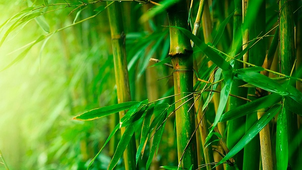 benefits-of-bamboo-fibre-ortohispania3