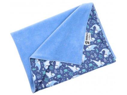 modra zraloci VYR06171. . .o