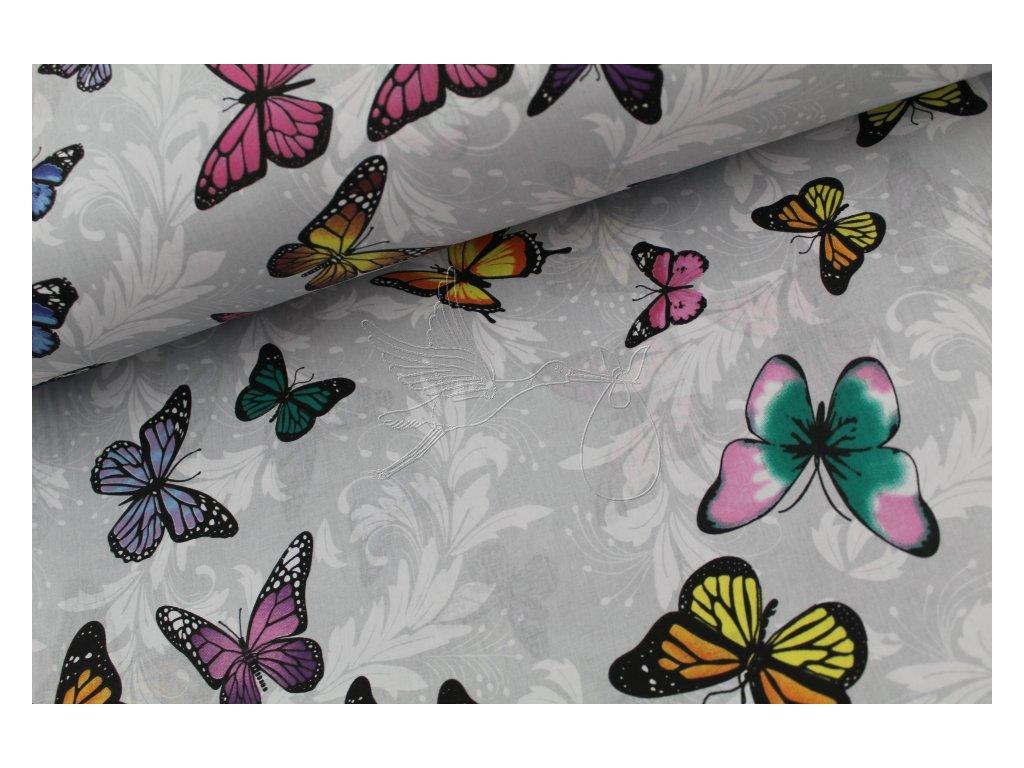 1152 3 motylci na sede bavlnene platno sire 240cm