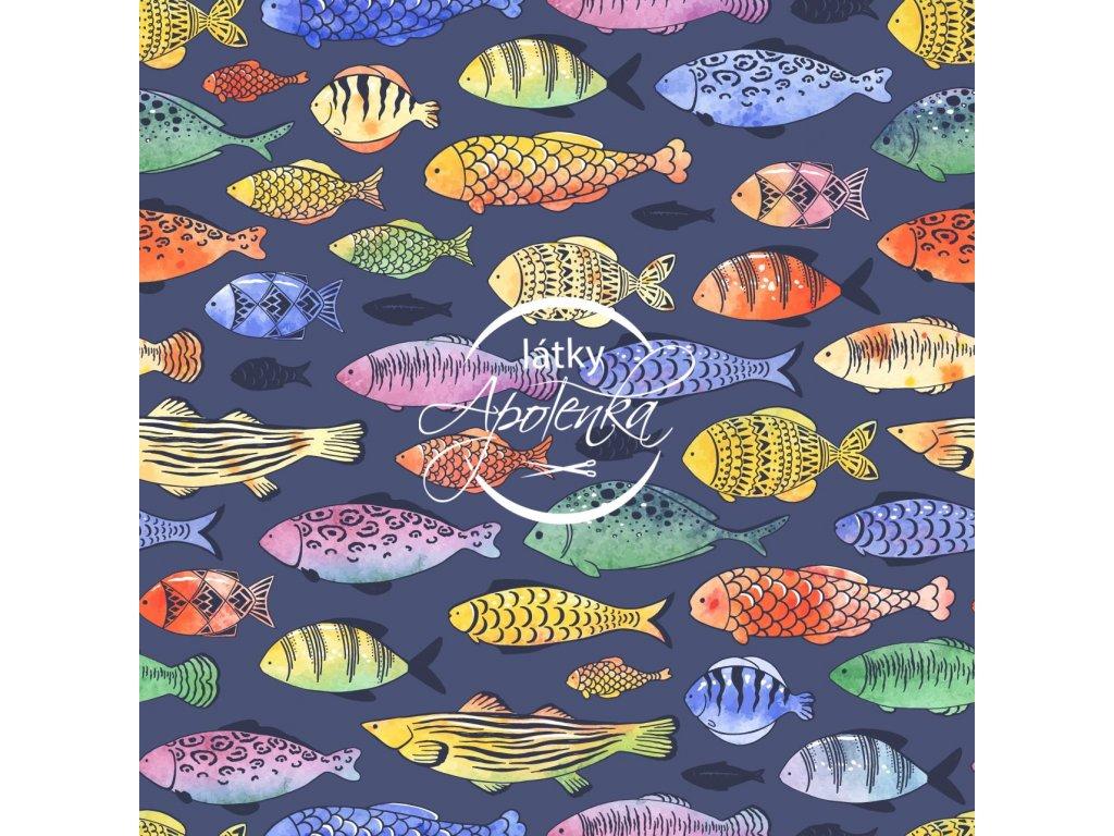 ryby na modré
