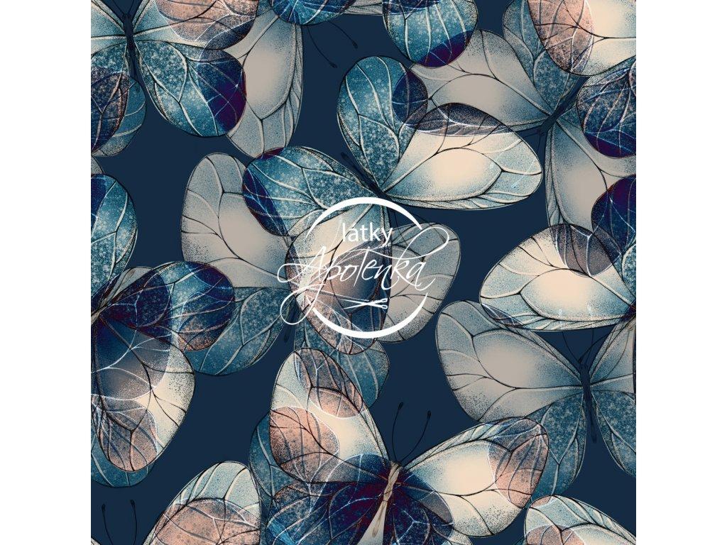 motýlci na modré