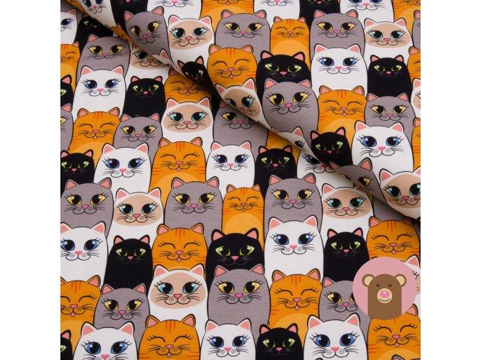 teplákovina Barevné kočičky