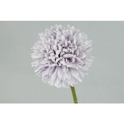 Kvet cesnaku, farba svetlo fialová