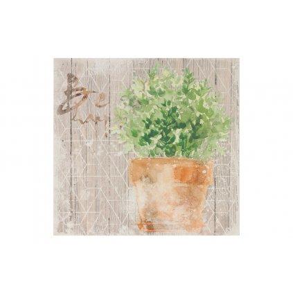 Obraz na plátne  bylinka v kvetináči 28x28x1,5cm