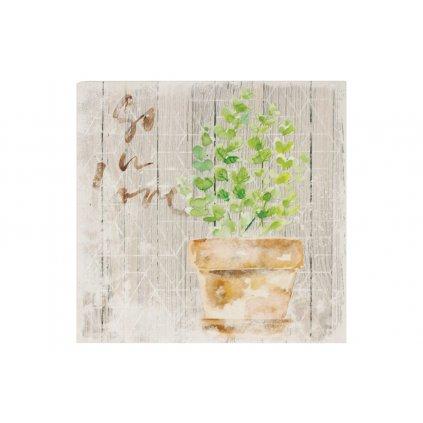 Obraz na plátne bylinka v kvetináči  šedo zelený 28x28x1,5cm