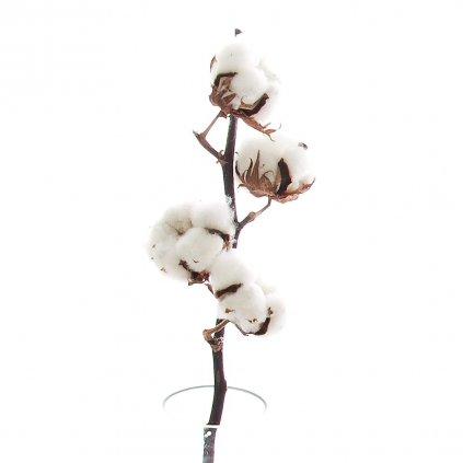 Sušená bavlna 4