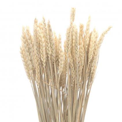 Sušená bielená pšenica