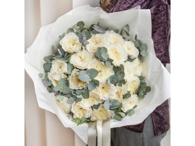 Růže Patience (David Austin)