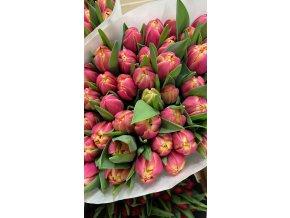 Tulipány Pivoňkové (fialové)