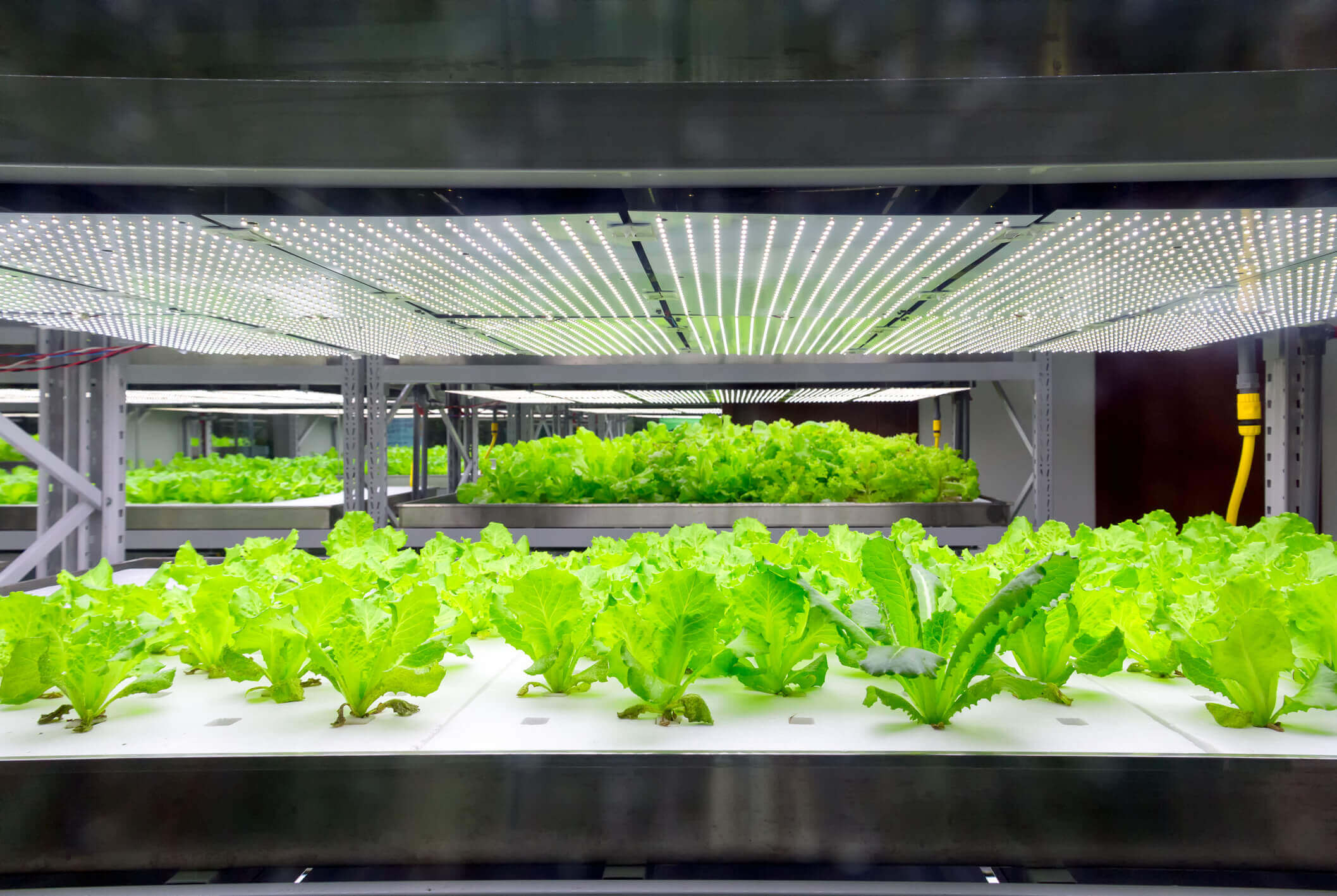 The Use of LED Lighting in Cannabis Cultivation: A Technology with a Bright Future