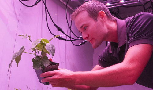 LED revolution in horticulture 'creates big opportunities'