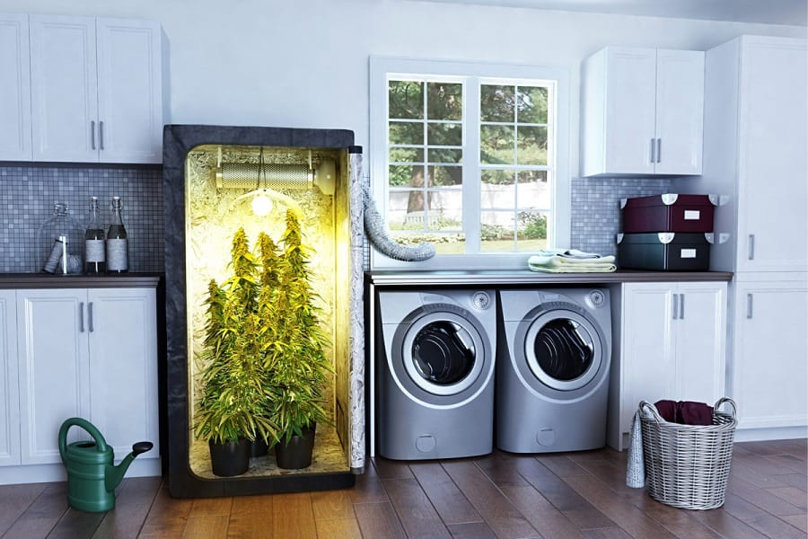 Everything You Need to Know About Grow Boxes