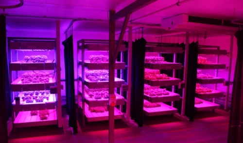 LEDs found to increase yields in wide range of plants